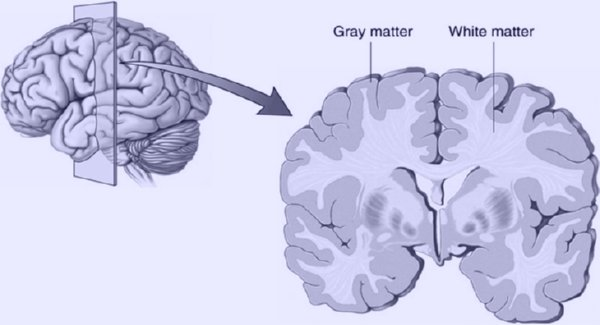 grey matter vs white matter freudforthought
